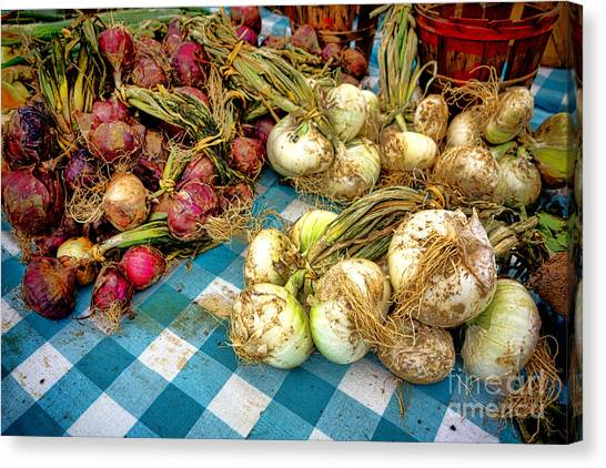 Vegetable Stand Canvas Print - Organic Onions At A Farm Market by Olivier Le Queinec