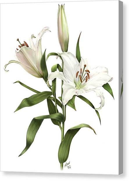 Oriental Lily Siberia Canvas Print