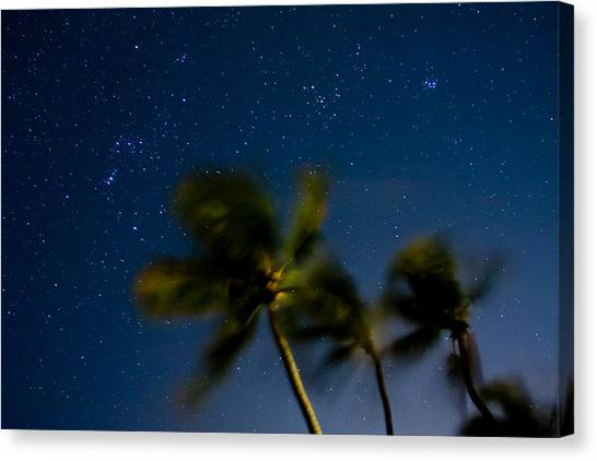 Orion And Windswept Palms Canvas Print