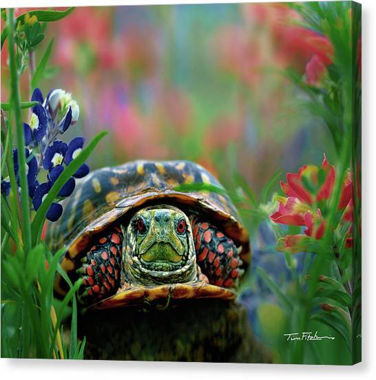 Ornate Box Turtle Canvas Print