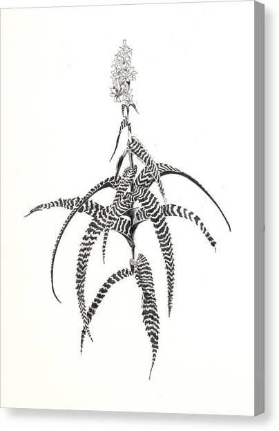 Orthophytum Gurkenii Canvas Print