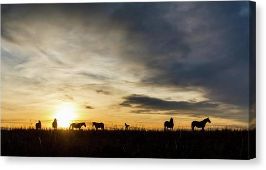 Osage Horses Canvas Print