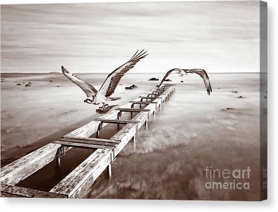 Osprey Canvas Print - Osprey On The Move Bw by Laura D Young