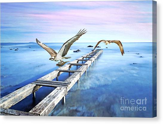 Osprey Canvas Print - Osprey On The Move by Laura D Young