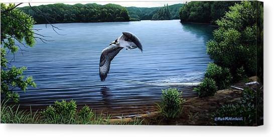 Osprey Over Clear Lake Canvas Print by Mark Mittlesteadt