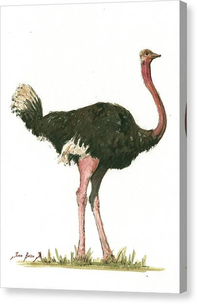 Large Birds Canvas Print - Ostrich Bird by Juan Bosco
