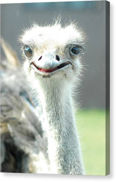 Ostrich Grin Canvas Print