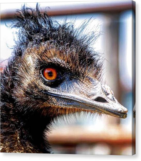 Ostriches Canvas Print - #ostrich #japan #hokkaido #2012memories by Yusuke Takahashi