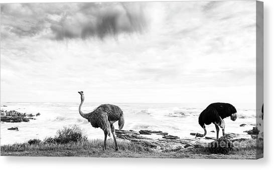 Canvas Print featuring the photograph Ostrich Pair Beside Ocean Black And White by Tim Hester