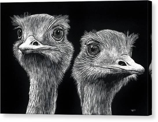 Ostrich Pair Canvas Print