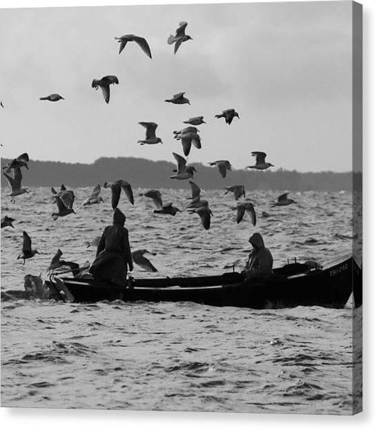 Seagulls Canvas Print - #ostsee  #sea #meer #möve #seagull by Sophie Kaluza