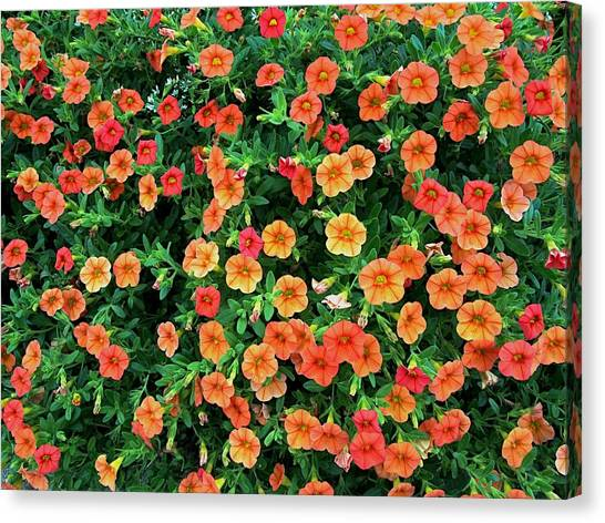 Oklahoma State University Canvas Print - Osu Flowers  by Buck Buchanan