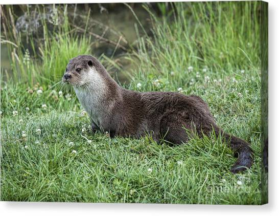 Otter By The Water Canvas Print by Philip Pound