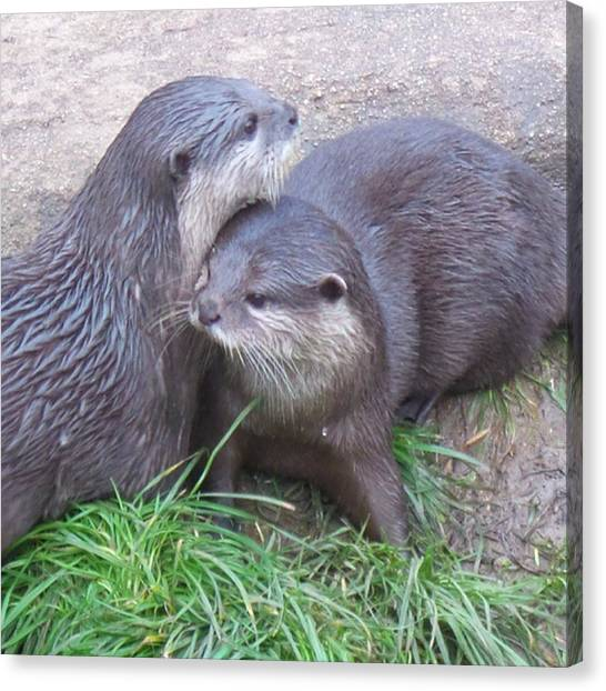 Otters Canvas Print - Otter Love. #otters #nature #wildlife by Katie Greenwood
