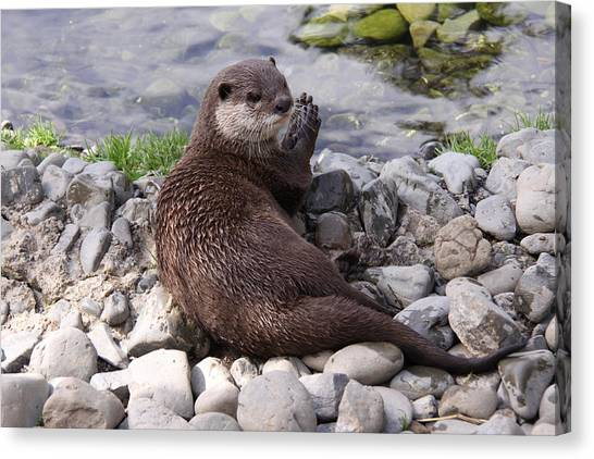 Otter Playing With Rocks Canvas Print by Stephen Athea