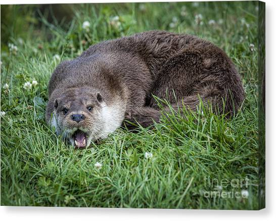 Otter With Mouth Open Canvas Print by Philip Pound