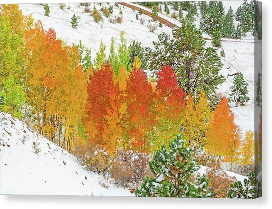 Our Winter Begins Around Mid October.  Canvas Print