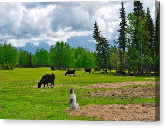 Out In The Pasture Canvas Print