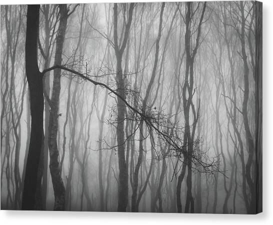 Sherwood Forest Canvas Print - Out Of Line by Chris Dale