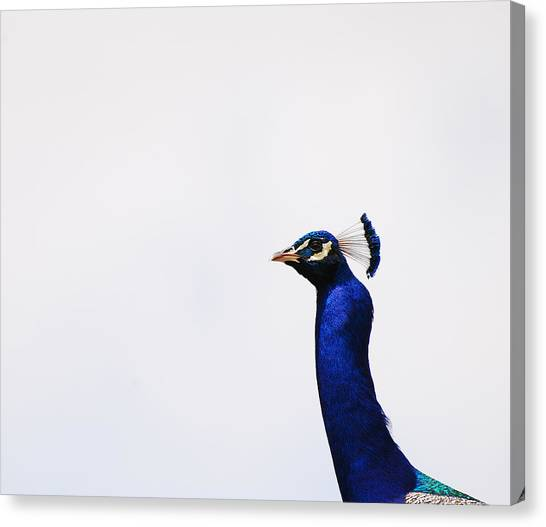 Peacocks Canvas Print - Out Of Nowhere by Jean Booth