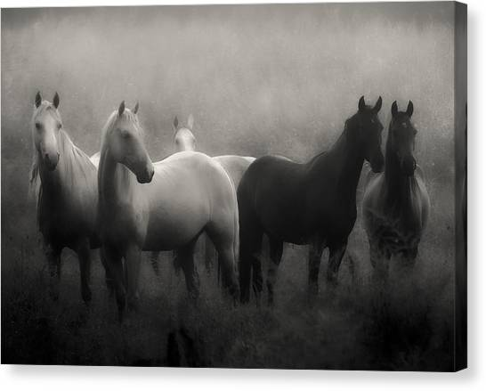 Black and white horse canvas print out of the mist by ron mcginnis