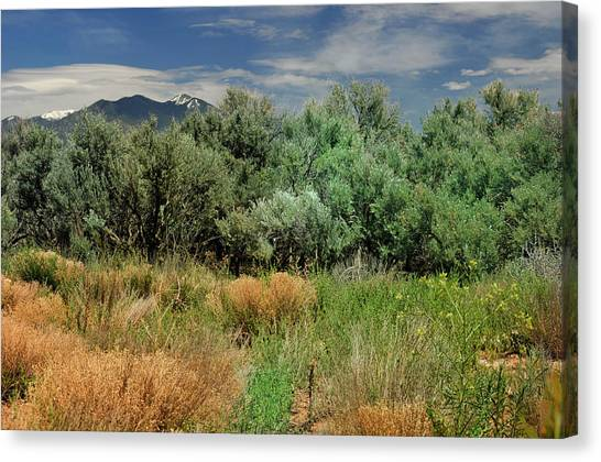 Out On The Mesa 1 Canvas Print