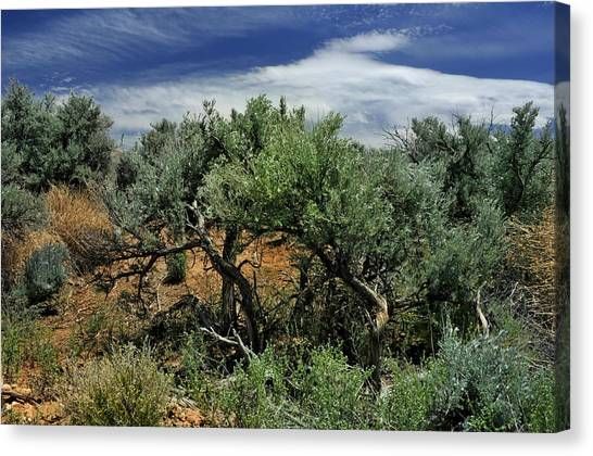 Out On The Mesa 3 Canvas Print
