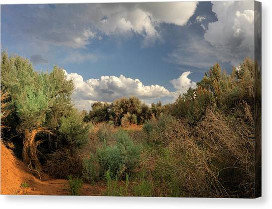 Out On The Mesa 4 Canvas Print