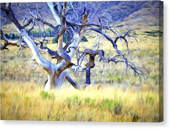 Rolling Hills Canvas Print - Out Standing In My Field by James Steele