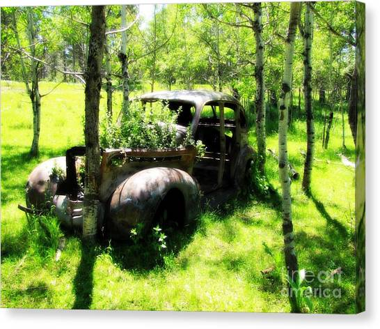 Out To Pasture Canvas Print