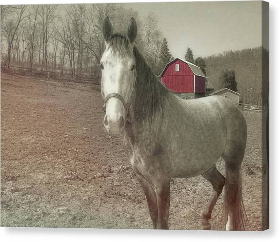 Out To Pasture Canvas Print by JAMART Photography