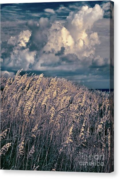 Outer Banks - Sea Oats Swaying In A Storm Fx Canvas Print by Dan Carmichael