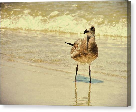 Outerbanks Gull Canvas Print by JAMART Photography