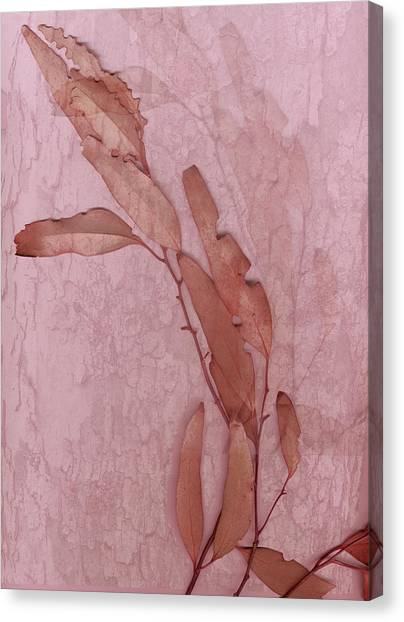 Over Pink Canvas Print by Eileen Shahbazian
