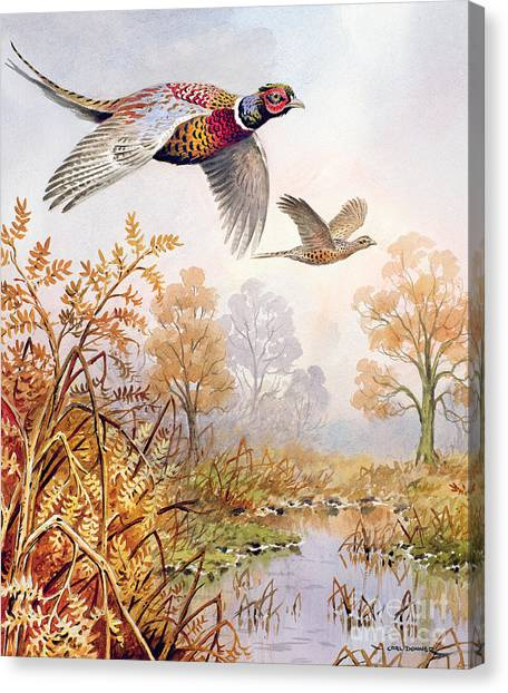Pheasants Canvas Print - Over The Fen by Carl Donner