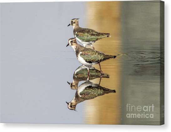 Overlappwing Canvas Print