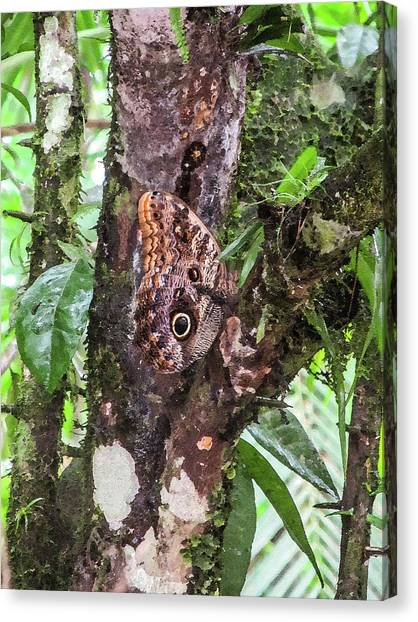 Owl Butterfly On A Tree Canvas Print