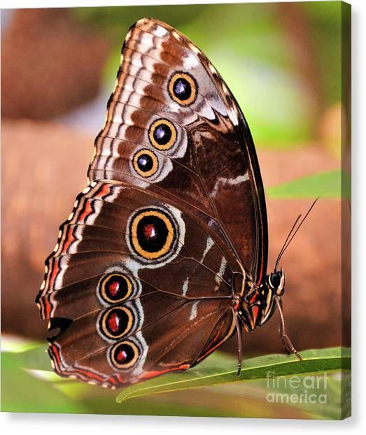Owl Butterfly Portrait Canvas Print