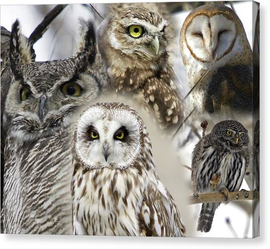 Pigmy Canvas Print - Owl Collage by Clinton Nelson