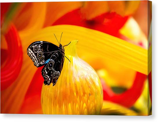 Yellow Butterfly Canvas Print - Owl Eye Butterfly On Colorful Glass by Tom Mc Nemar