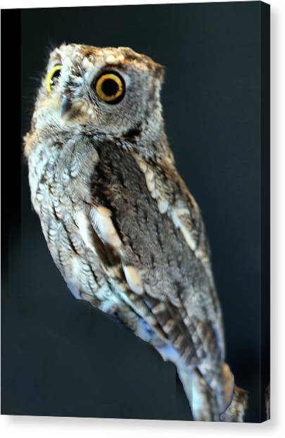 Owl On Black Canvas Print by Michael Riley