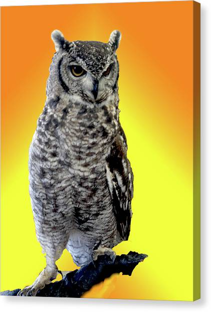 Owl On Branch Canvas Print by Michael Riley