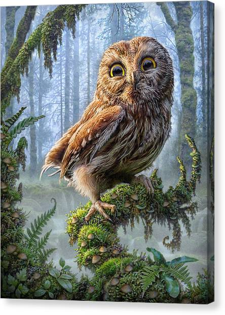 Oregon Canvas Print - Owl Perch by Phil Jaeger