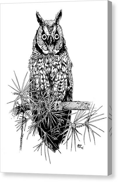 owl Canvas Print by Stephen Taylor