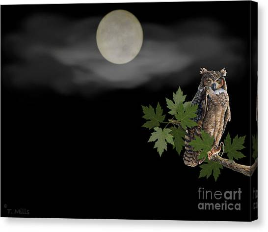 Owl Canvas Print by Terri Mills
