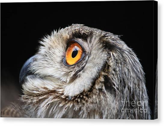 Owl The Grand-duc Canvas Print