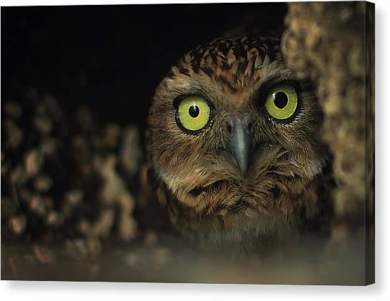 Caves Canvas Print - Owl by Zoltan Toth