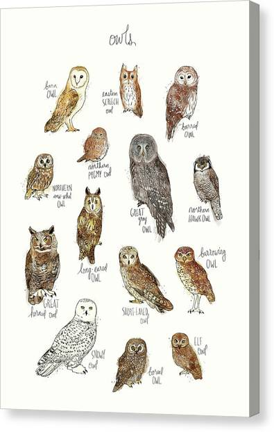 Saws Canvas Print - Owls by Amy Hamilton