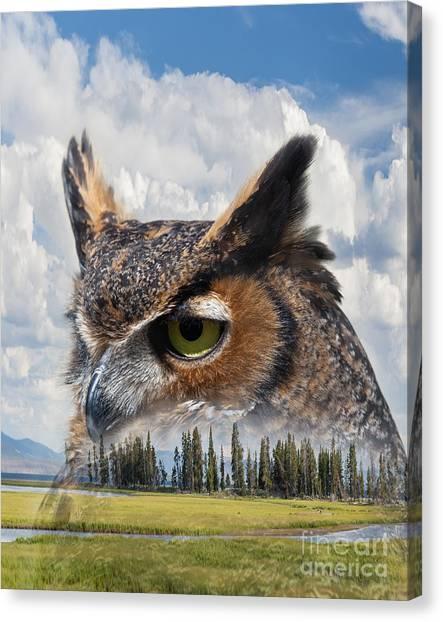 Owl's Rest Canvas Print