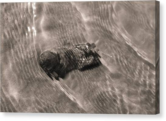 Oysters Canvas Print - Oyster Shell In Water by Dustin K Ryan